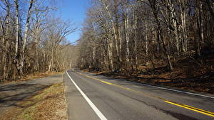 Картинки Штаты Дороги Осенние Асфальт Деревья Shenandoah National Park, Virginia Природа