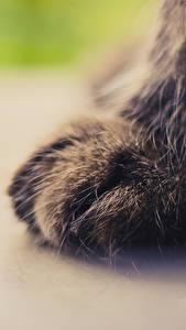 Обои Кошки Крупным планом Макросъёмка Лап животное