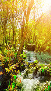 Обои Цзючжайгоу парк Китай Парк Дерево Ветка Ручеек