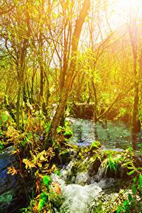 Обои Цзючжайгоу парк Китай Парки Дерево Ветка Ручеек Природа
