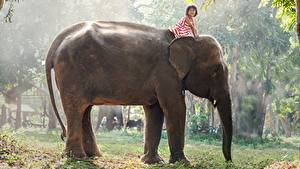 Фотография Азиатка Слоны Девочки животное