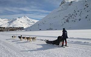 Обои Зимние Гора Собаки Снеге Сани Бег Тень