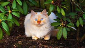 Картинка Кошка Смотрит Животные
