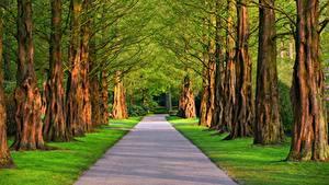 Фото Дороги Лето Аллея Деревья Трава Природа