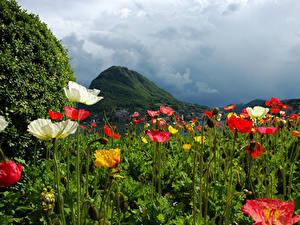 Обои Швейцария Горы Поля Маки Lugano