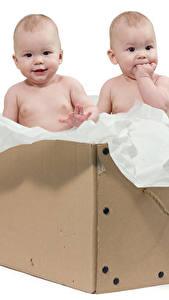 Фото Белый фон Коробки Младенец Двое