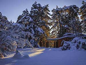 Фото Швеция Зима Снега Ель Природа