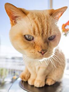 Картинки Кошки Смотрят Морды Животные