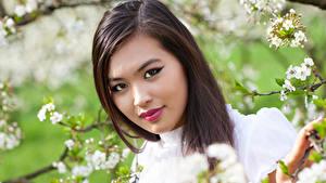 Фото Азиаты Шатенка Лицо Ветки Красивый молодая женщина