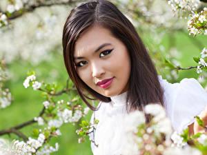 Обои для рабочего стола Азиаты Шатенка Лицо Ветки Красивый молодая женщина
