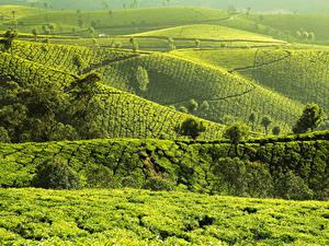 Обои Индия Поля Холмов Munnar