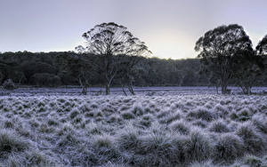 Фотография Австралия Парки Зимние HDR Дерево Траве Barrington Tops National Park Природа