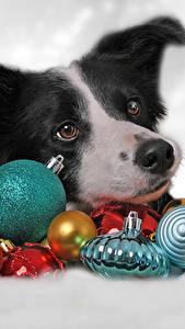 Картинки Новый год Собаки Шарики Бордер-колли