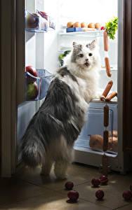Фото Коты Сосиска Смотрят Холодильник Забавные животное