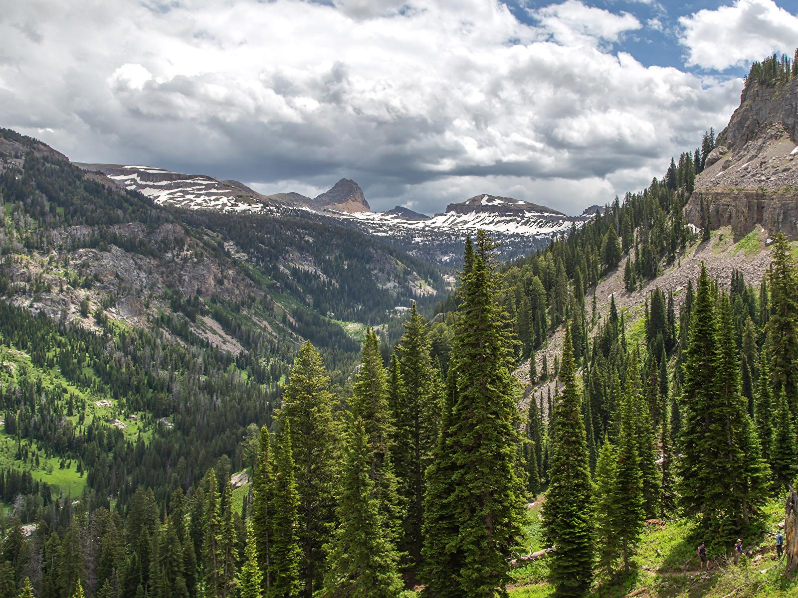 Картинка штаты Caribou-Targhee National Forest Ель Горы Природа лес 1600x1200 США ели гора Леса