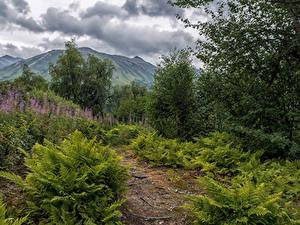 Фотография Аляска Парк Горы Кусты Облака Chugach National Forest Природа