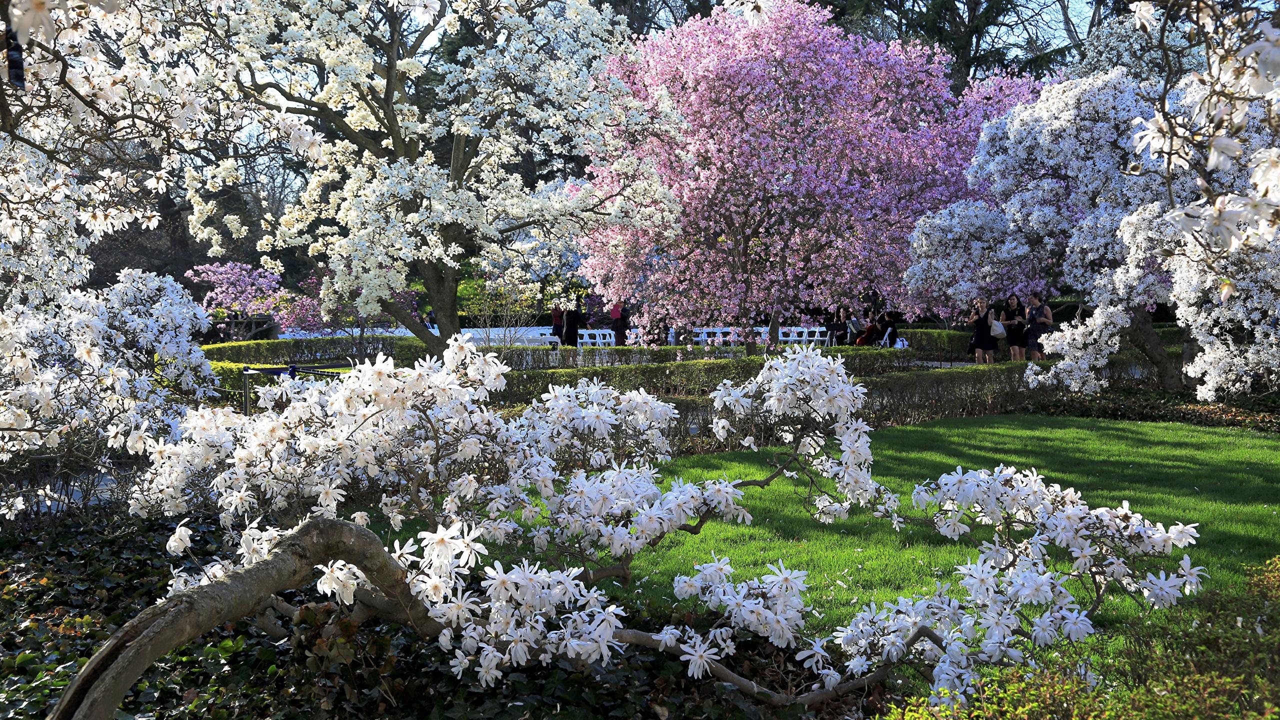 Brooklyn botanic garden for Jardin gratuit paris