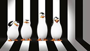 Фотография Пингвины Мадагаскар Полоски Penguins of Madagascar Мультфильмы 3D_Графика