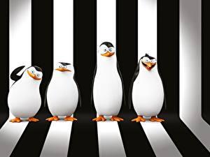 Фотография Пингвины Мадагаскар Полоски Penguins of Madagascar 3D_Графика