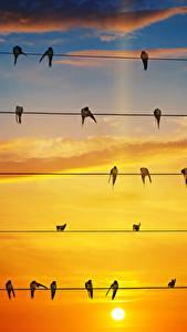 Фото Небо Рассветы и закаты Птицы Облака Электрический провод swallows Животные