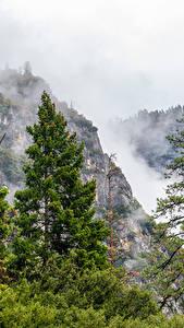 Картинки США Парки Горы Йосемити Ель Туман Деревья