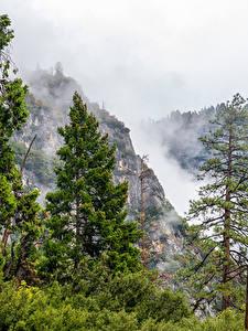 Картинки США Парк Горы Йосемити Ель Тумана Деревьев
