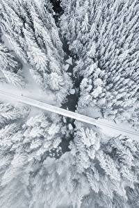 Картинка Зимние Дороги Сверху Дерево Снег Природа