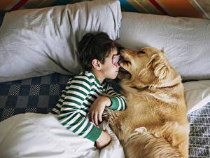 Картинка Собака Мальчики Спит Двое Языком Милая Подушки Дети Животные