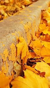 Фото Вблизи Осенние Листва Желтый Клён Природа