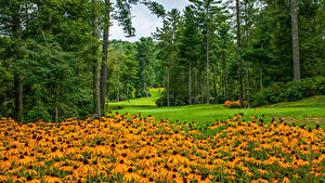 Картинка Америка Парк Газания Газоне Дерева North Carolina Природа
