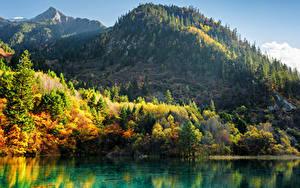 Обои Цзючжайгоу парк Китай Парк Гора Осень Озеро Пейзаж Дерева Природа