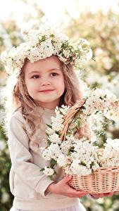 Картинки Цветущие деревья Девочки Корзинка Миленькие Красивые Ребёнок