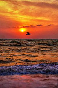 Картинки Рассветы и закаты Море Птицы Волны