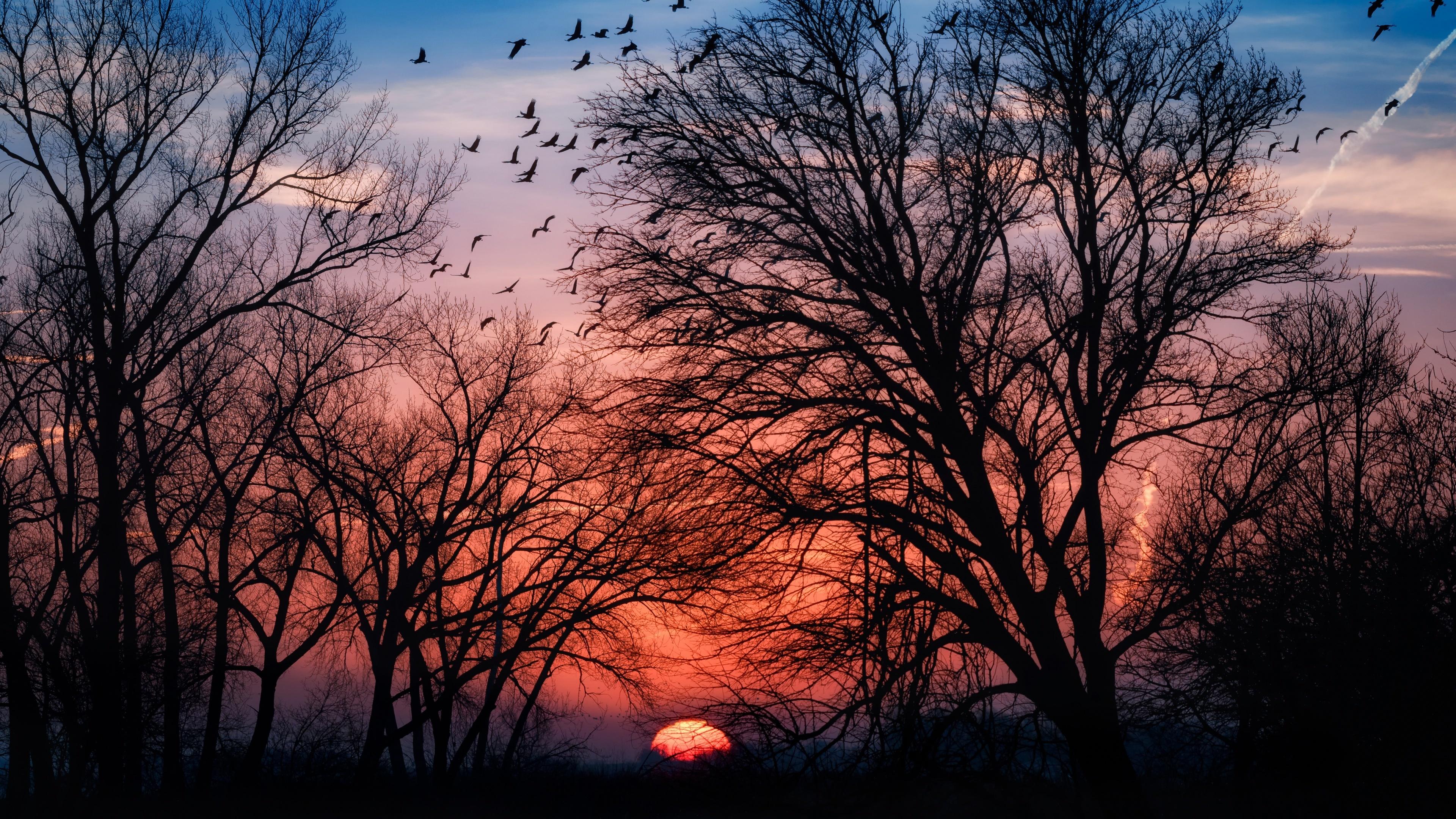 Картинки силуэты Природа Рассветы и закаты ветвь деревьев 3840x2160 Силуэт силуэта рассвет и закат Ветки ветка на ветке дерево дерева Деревья