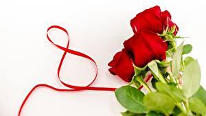Обои Международный женский день Розы Красный Цветы