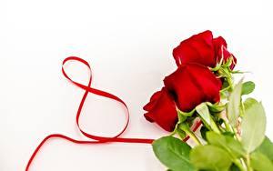 Обои Международный женский день Розы Красный