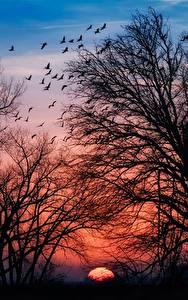 Картинки Рассветы и закаты Деревьев Ветвь Силуэты Природа