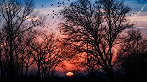 Картинки Рассветы и закаты Деревьев Ветвь Силуэт Природа