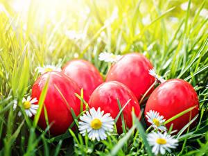 Фотографии Пасха Ромашки Яйца Красный