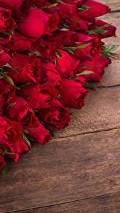 Обои Розы Много Доски Красная Цветы