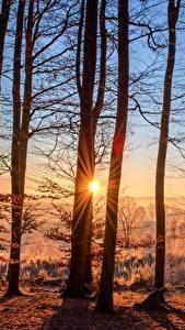 Фотография Рассвет и закат Лес Осенние Солнца Деревья Лучи света Природа