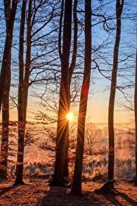 Фотография Рассвет и закат Лес Осенние Солнца Деревья Лучи света