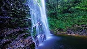 Фото Вьетнам Водопады Скала Мох Деревья Sapa Природа
