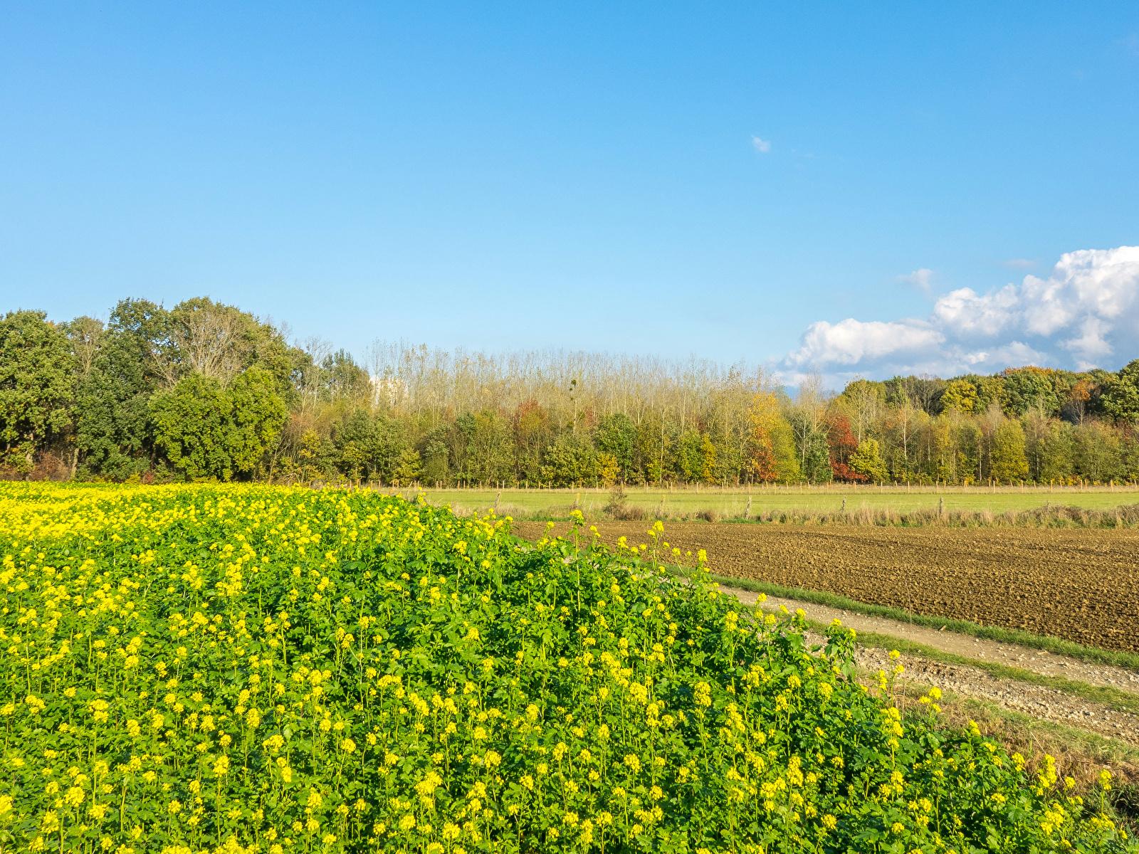 Фотография Бельгия Houwaart Vlaams Brabant Природа весенние Поля 1600x1200 Весна