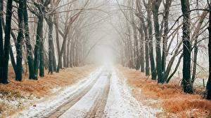 Картинки Зимние Дороги Снега Дерево Аллеи Тумане