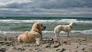 Фото Берег Волны Собаки Двое Животные