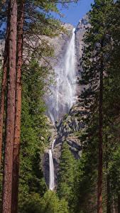 Фотографии Штаты Парки Водопады Йосемити Деревья Ствол дерева Утес Природа