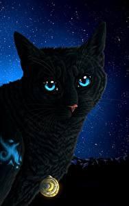 Фотографии Коты Рисованные Ночь Взгляд Животные