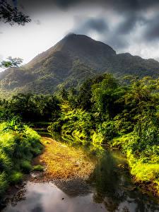 Фотографии Тропический Горы Ручеек Кусты HDRI Samoa