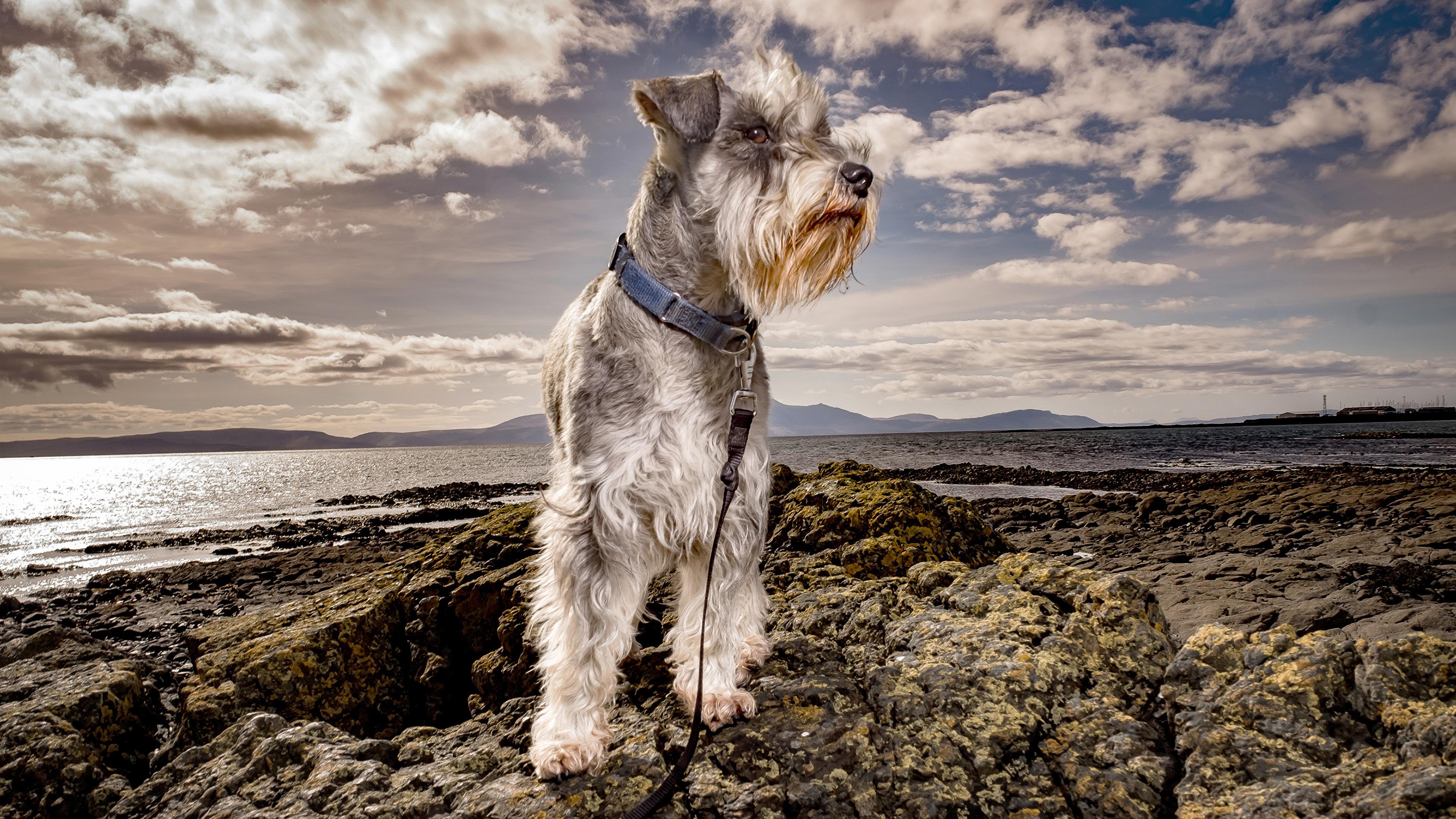 собака берег море без смс